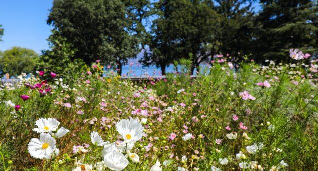 Bell Haven Flower Farm